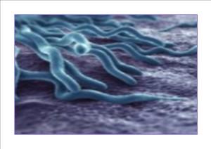 Lyme - Biori bio-fotonen therapie